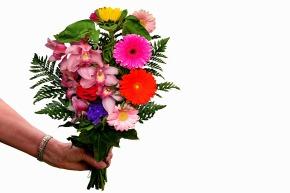 flowers-3990363_1920